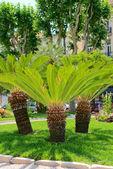 Three low palms — Stockfoto