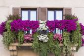 Violet floral pot on balcony Rome. Italy — Stock Photo