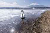 Mt. Fuji winter season shooting from Lake Yamanaka. Yamanashi, Japan — Stock Photo