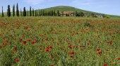 Colline toscane — Стоковое фото
