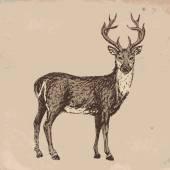 Reindeer — Vettoriale Stock