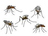 Biting mosquitoes — Stock Vector