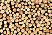 Stacked tree wood logs background  — Stock Photo