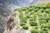 Oman Saiq Plateau — Stock Photo