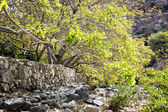 Riverbed Wadi Bani Habib — Stock Photo