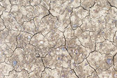 Parched ground — Stock Photo