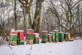 Been boxes in winter — Stock Photo