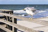 Sitting seagull — Stock Photo