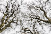 Leafless Treetops — Stock Photo