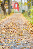 Dirt road and with trees during autumn with fallen leaves — Stock Photo