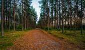 Trail for recreation during evening in the woods — Stock Photo
