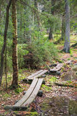 Marsh boardwalk in autumn located in the forest — Stock Photo