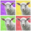 Lamb in colorful popart style — Stock Photo #60747079