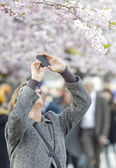 Woman takes photos with mobile phone at cherry blooming — Stock Photo