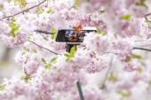 Two asian woman taking a selfie during Cherry blooming with a se — Stock Photo