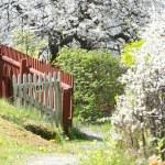 Beautiful lush garden during spring with white cherry trees — Stock Photo #72407957