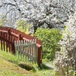 Beautiful lush garden during spring with white cherry trees — Stock Photo #72407967