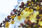 Colorful branch with red leafs and yellow flowers on a bright sk — Stock Photo