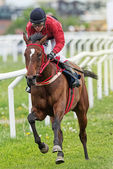 Jockey and horse in fast pace during race at the Nationaldags Ga — Stok fotoğraf
