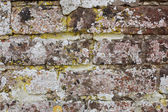 Weathered brick wall covered in lichen — Stock Photo