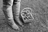 Woman wearing boots standing with a basket of fall leaves — Stok fotoğraf