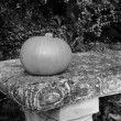 Small gourd on a stone bench — Stock Photo #62614465