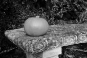 Small gourd on a stone bench — Stockfoto