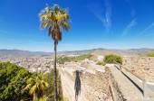 Palm tree, and Malaga city in the background view from Gibralfaro Castle. Malaga, Spain. — Stock Photo
