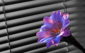 Cactus flower — Stock Photo