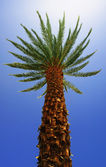 Bottom view of a palm tree — Stock Photo