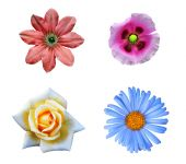 Flower set — Stock Photo