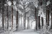 Snowy Road through the wintry forest — Stockfoto