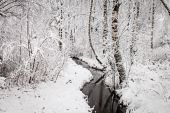 Wintry Creek in the Forest — Стоковое фото