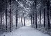 Snowy Road through the cold wintry forest — Stock Photo