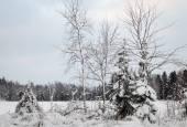 Snowy Trees in the Winter — Stockfoto