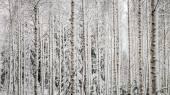Snowy trees Panorama — Stock Photo