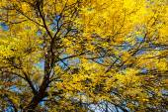 Yellow Autumn Tree — Stock Photo