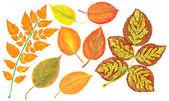 Watercolor foliage, autumn leaves — Stock Photo