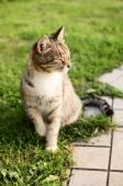The beauty cat — ストック写真