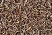 Green tea leaves background — Stock Photo