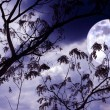 Halloween background. Spooky forest with full moon and dead trees — Stock Photo #53589501