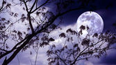 Halloween background. Spooky forest with full moon and dead trees — Stock Photo