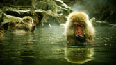 Snow monkey sitting in hot spring Japanese Macaque, Jigokudani Monkey Park, Snow monkey — Stock Photo