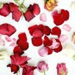 Dry roses flower on white background — Stock Photo #77692610