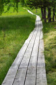 Wooden boardwalk through green countryside — Stock Photo