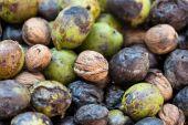 Background of wild walnuts — Stock Photo