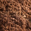 Background texture of topsoil — Stock Photo #67949535