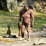 Australopithecus Afarensis Statue at Rocky Ground — Stock Photo #70937913