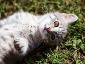 Funny kitten — Stock fotografie