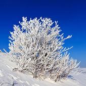 Snowy tree on a sunny day — Stock Photo